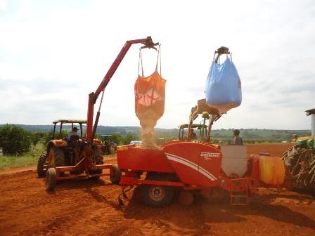 Plantio de Batata na região de Vargem Grande do Sul-SP em pleno vigor - Crédito José Henrique Dotta
