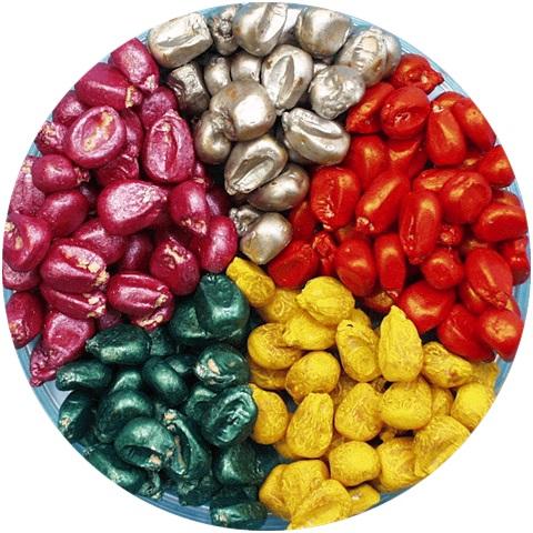 Além de revestir e padronizar as sementes, os polímeros levam proteção contra agentes externos e internos para o futuro da planta