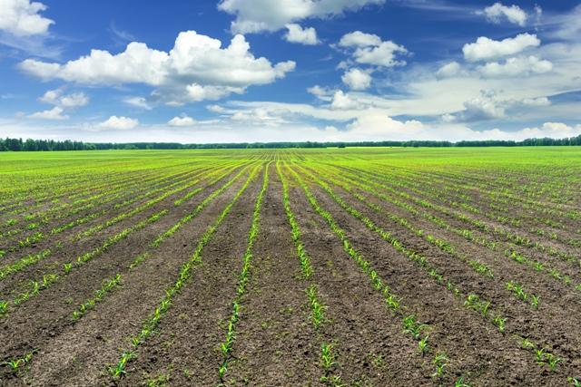 Fertilizantes especiais - um novo patamar de produtividade - Créditos Shutterstock
