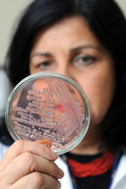 Mariangela Hungria, pesquisadora da Embrapa Soja e especialista em inoculação - Créditos Embrapa