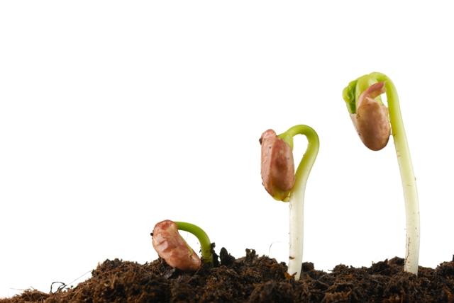 O feijão está entre as culturas bem atendidas pelo controle biológico - Créditos Shutterstock