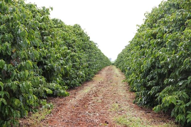 O fertilizante organomineral contém nutrientes que são liberados mais lentamente no solo - Crédito Cristiano Soares