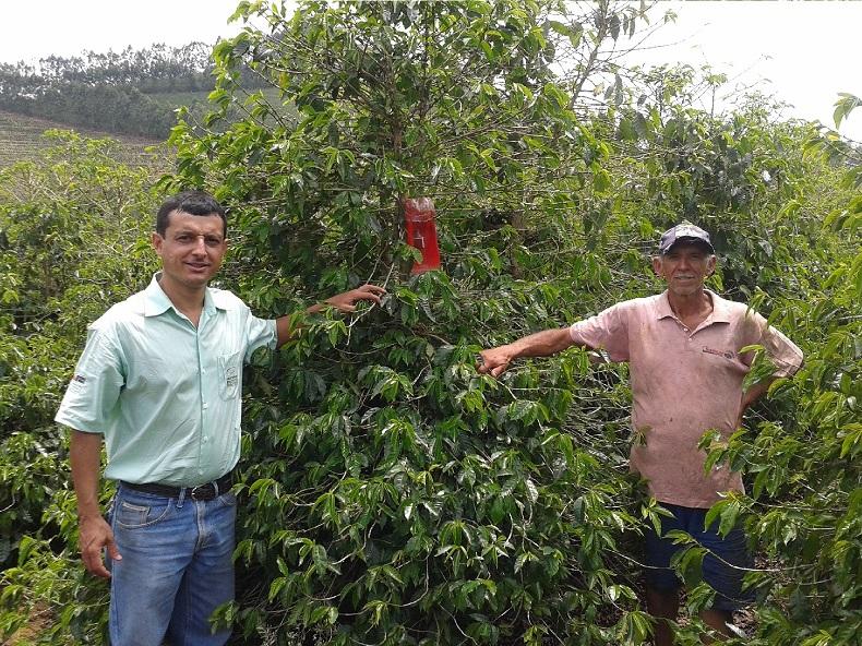 O Coordenador Técnico Regional de Muriaé, o engenheiro agrônomo Ricardo Tadeu Galvão e o cafeicultor familiar Adão Mendes (D), que cedeu sua propriedade para servir de unidade demonstrativa da experiência com a armadilha de capturar broca (E).