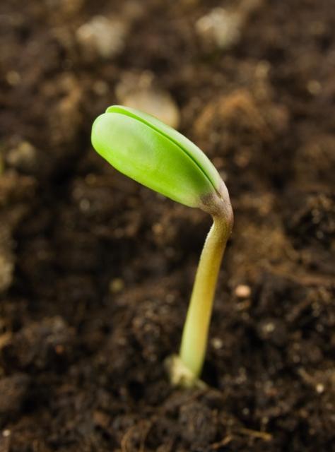A aplicação de ácidos orgânicos eou aminoácidos favorecem o crescimento microbiano do solo - CréditoShutterstock