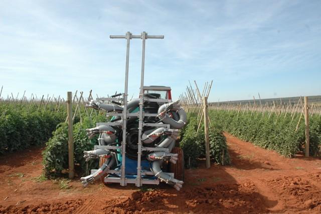 A estratégia de controle é a aplicação frequente de fungicidas - Crédito Luize Hess