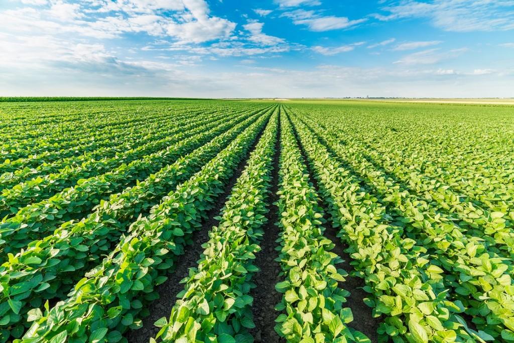 O nitrogênio líquido via foliar é uma alternativa para suplementar a nutrição via solo - Crédito Shutterstock