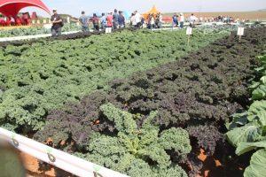 Cerca de mil visitantes conheceram novas variedades de sementes e produtos